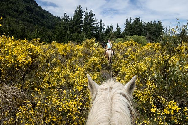 Paardrijden als sport